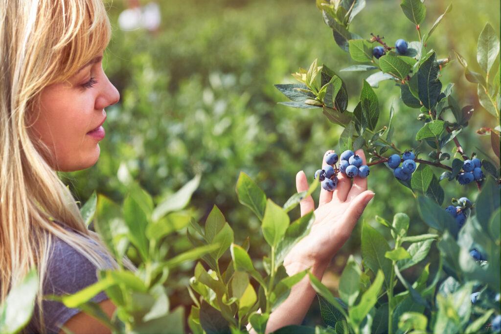 C2 A9Eike Blaubeere 1024x683 Die Pflanzentrends des Jahres